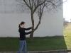 je-plie-les-arbres